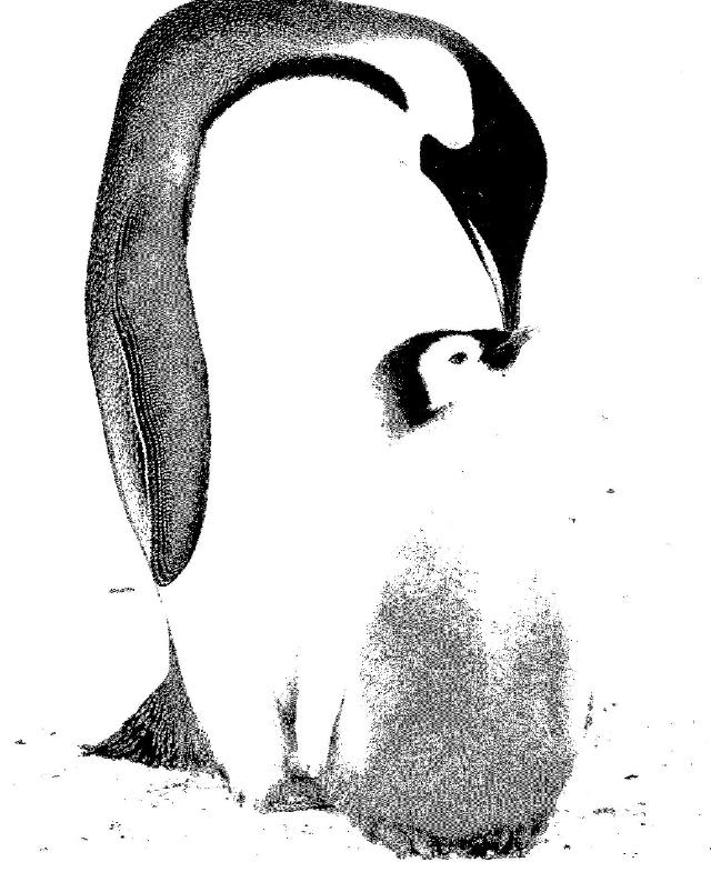 照片作品的形象具体,层次细腻、色调丰富,能生动地再现表现对象的原有面貌,给人以真实的美感;黑白画鲜明、概括、简洁、单纯的黑白相间给人一种装饰性的节奏美感。 变照片为黑白画,要求我们根据照片中的颜色的深浅来给作品加上黑白灰,在造型与黑白关系的处理上要求概括、集中,灵活运用取舍、夸张、装饰、变形的手法,做到既简洁又能突出主体,既单纯又鲜明。