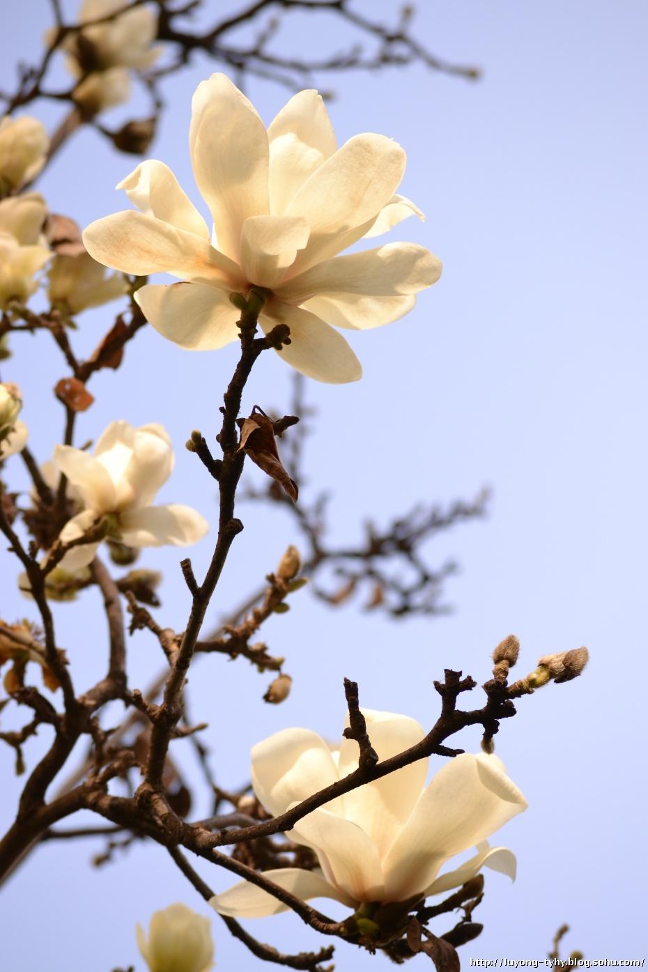 春天来了-太阳花园-搜狐博客