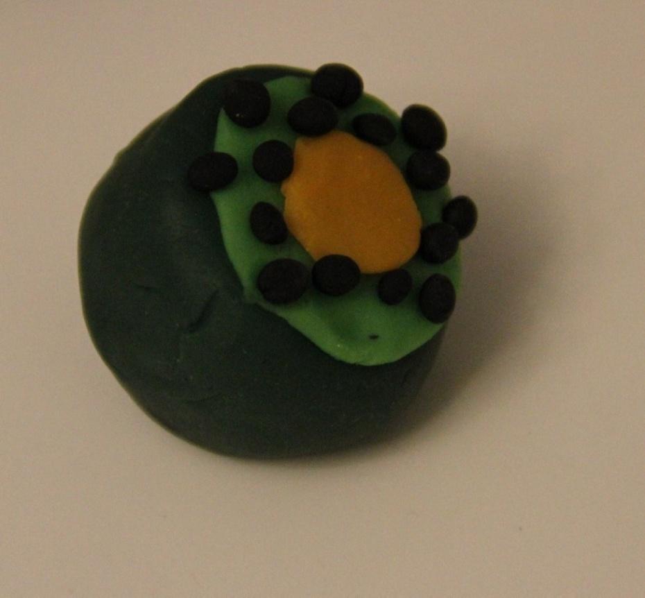 橡皮泥青菜制作步骤图片