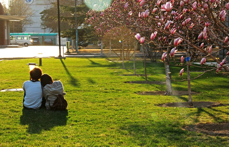2012春天-北工大校园的风花雪月