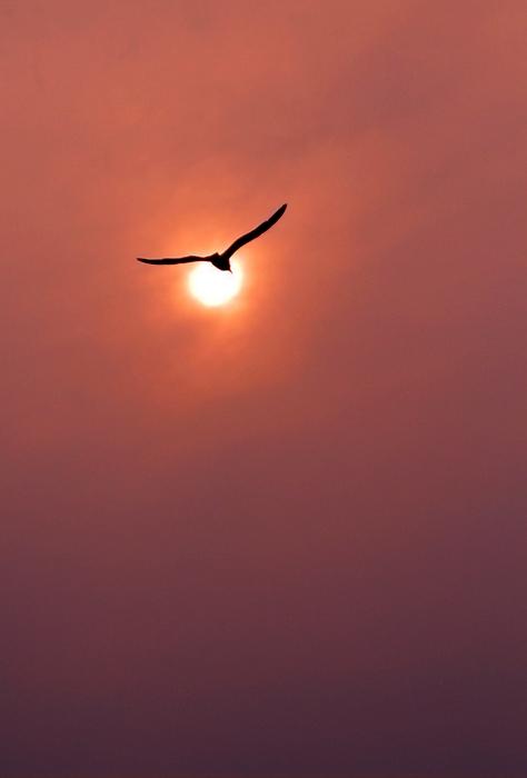 动态天空飞鸟素材