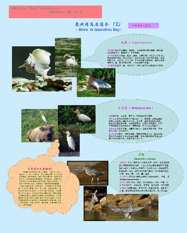 爱鸟宣传海报(4-10 泉州湾鸟类保护)-守望红树林——