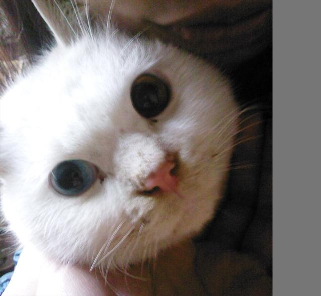 开心的是3月31号在十堰爸爸妈妈家里养的猫猫生下了4只小猫猫,难过的