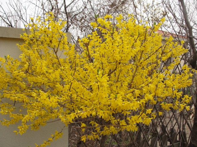 估计这场春雨后,很多树木要发芽啦,绿色啊,我太喜欢这样的颜色