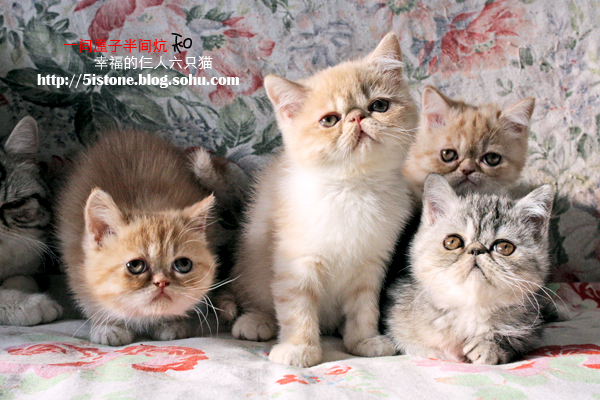 猫头像可爱 半张