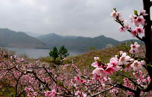 那桃花盛开的地方