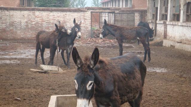 新基地旁百余只动物现状-天津流浪动物的家