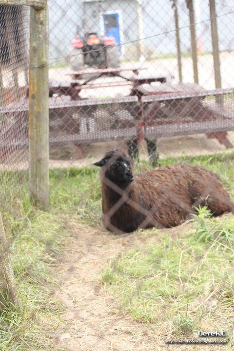 喂养小动物-抱抱的成长空间-搜狐博客