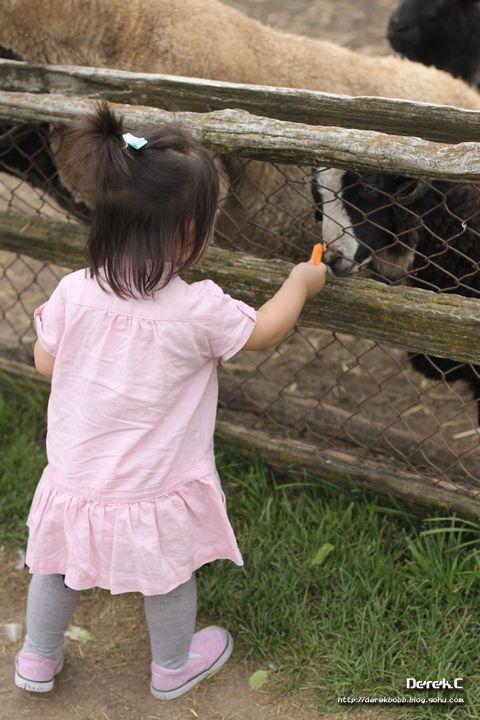 喂养小动物-抱抱的成长空间-我的搜狐