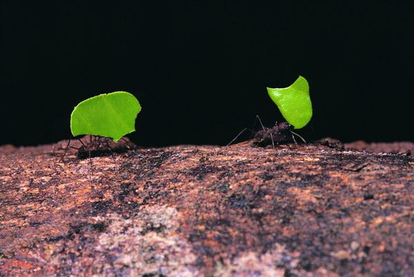 梦见树里有好多蚂蚁