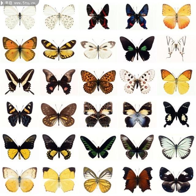透明背景动物蝴蝶