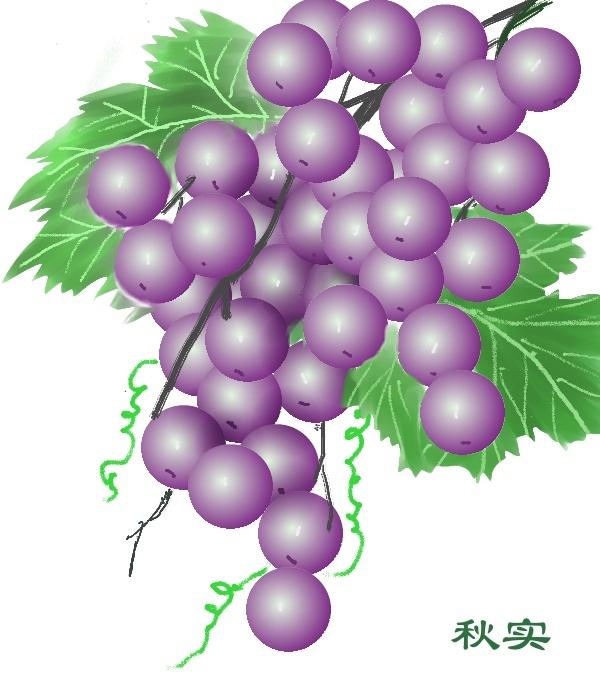 童葡萄画法步骤