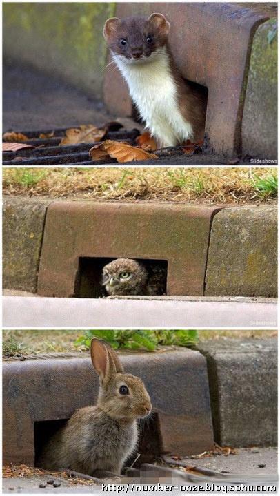 越来越多的小动物像